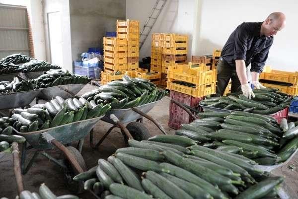 Немецкие фермеры оказались на грани разорения из-за российского эмбарго