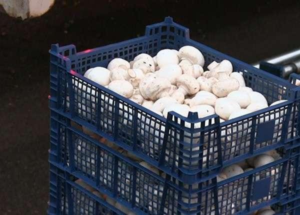 Под Ростовом-на-Дону задержана фура с 10 тоннами польских грибов