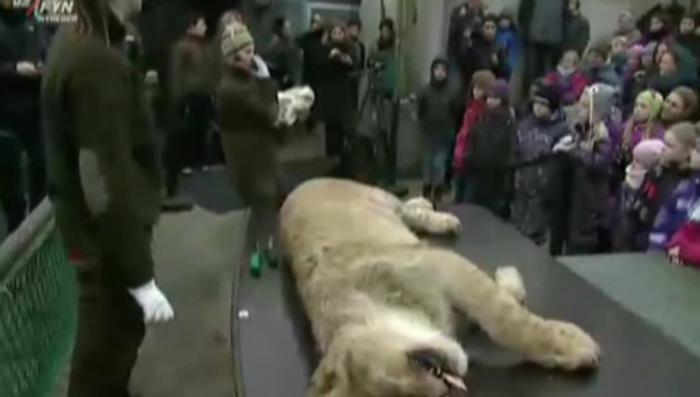 Извращенцы из зоопарка Копенгагена показал детям новое «шоу» с расчлененкой