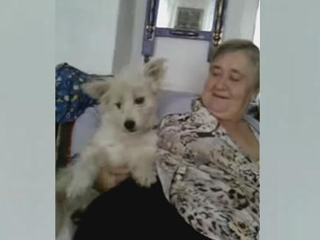 Говорящую собаку нашли в Бурятии