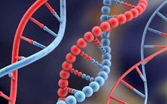 ДНК-анализ подтвердил, что русские и украинцы – один народ