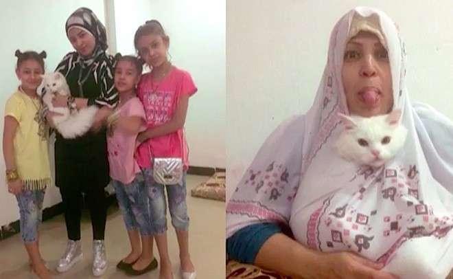 Кот-беженец добрался из Ирака в Норвегию