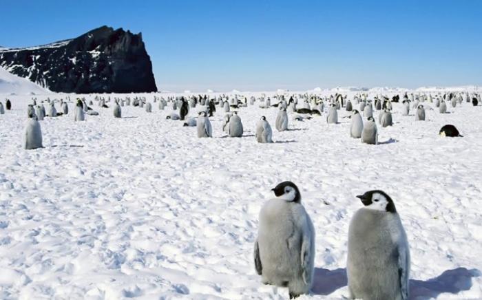 Страшная тайна Антарктиды