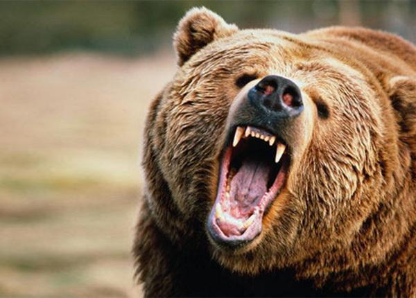 Геологи в ХМАО отбились от медведя бензопилой и бульдозером