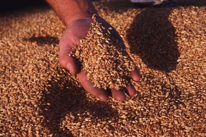 Хозяйства Алтайского края готовы предоставить около 17 тыс. тонн элитных семян для посевной