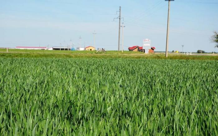 «Мираторг» совместно с ФАНО запускает в Смоленской области проект по замещению импорта семян