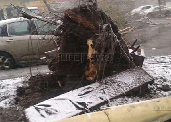 В Ростове-на-Дону, где упал Боинг рейса FZ981, ветер валил деревья