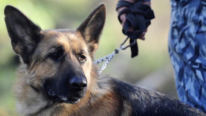 Для разминирования Пальмиры Россия пошлет собак и роботов