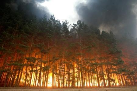 Украинские каратели варварски уничтожают леса Донбасса
