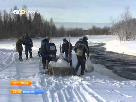 В Мурманской области в реку Вялу выпущено 460 тысяч мальков атлантического лосося