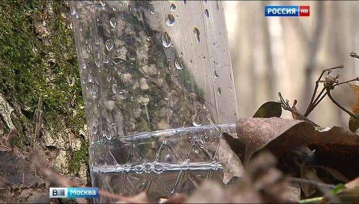 В весеннем лесу пить берёзовый сок - опасно для здоровья