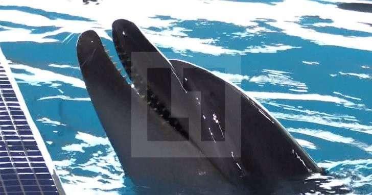 В Москве открылся первый Центр плавания с дельфинами