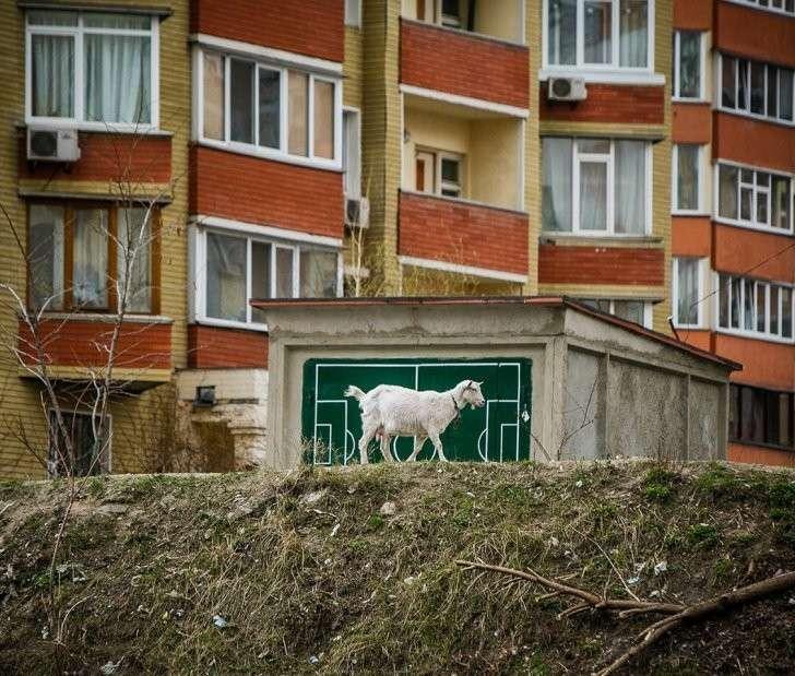 Киевский зверополис