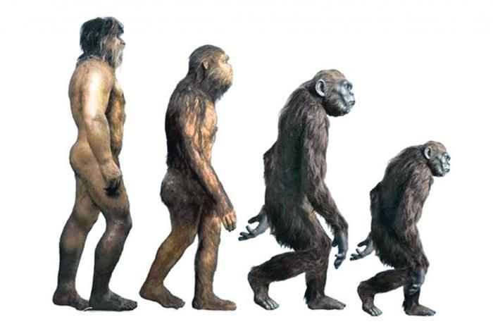 Мифология эволюции и реальность инволюции