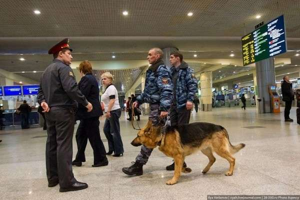 Таможенники России обучили собак находить нелегальные крупные суммы денег