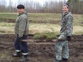 В ХМАО высажены 160 тысяч саженцев сибирской кедровой сосны