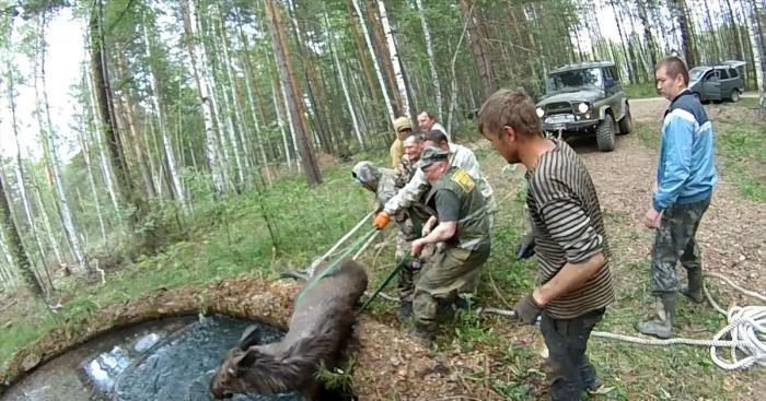 На Урале спасли лосиху, провалившуюся в бассейн заброшенного химзавода