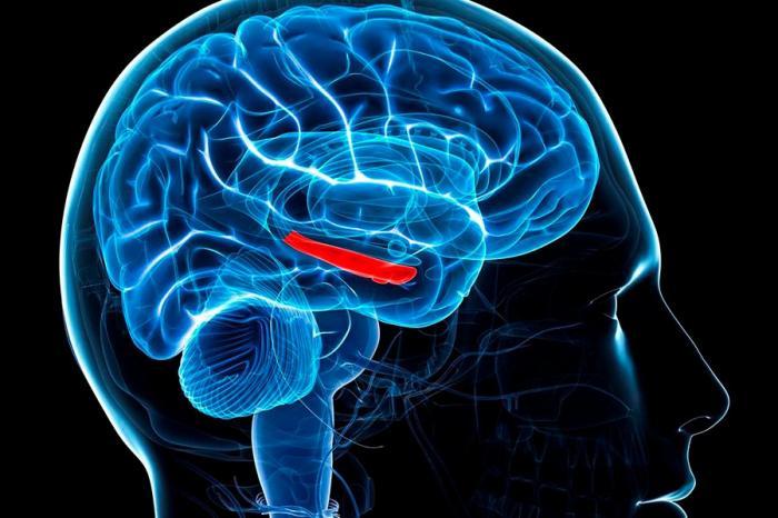 Парадоксы деградирующего мозга. Инволюция современного человека