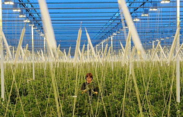 Тамбовские ученые разработали технологию ускорения роста растений лазером