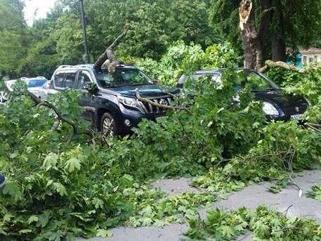 Ураган прошёлся по Петербургу и повалил деревья