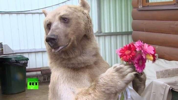 Интернет-звезда медведь Степан выполняет команды на испанском языке