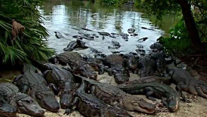 Трагедия в парке «Уолт Дисней»: отец не смог отбить сына у крокодила