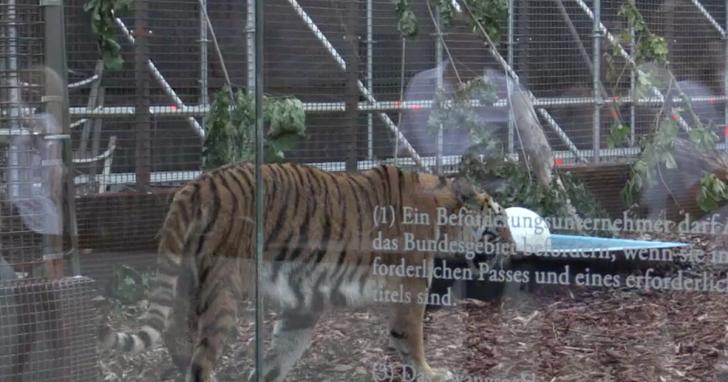В Берлине беженцев обещают скормить тиграм