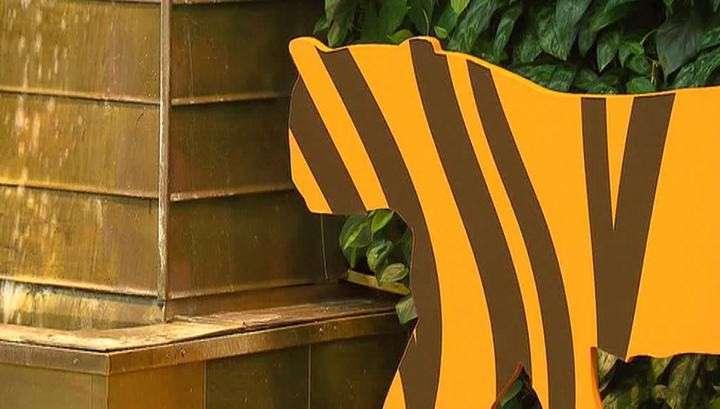 Телеканал «Живая Планета» представил уникальный фильм об амурских тиграх