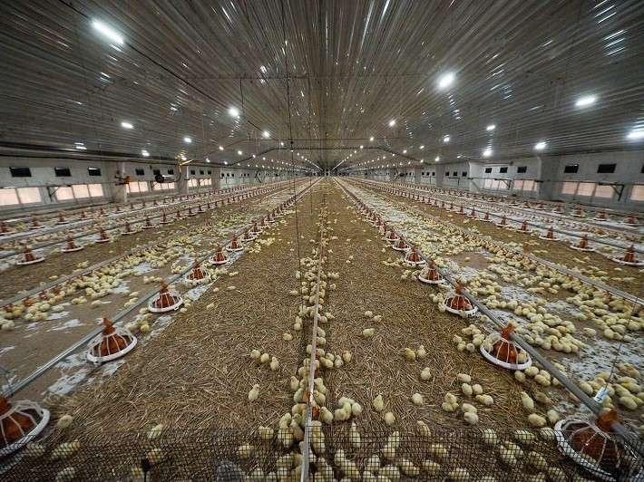 В Ставропольском крае построен крупный птицеводческий комплекс