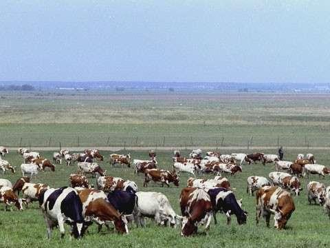 19.  Фермеры в Приморье за три года увеличили производство молока в 1,6 раза  история, политика, факты