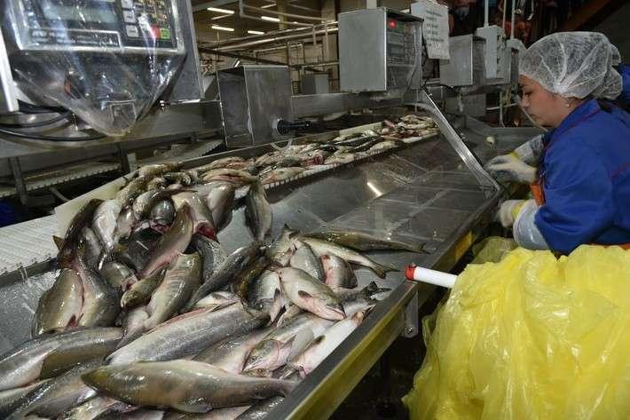 Рыбоперерабатывающий комплекс заработал в Хабаровском крае