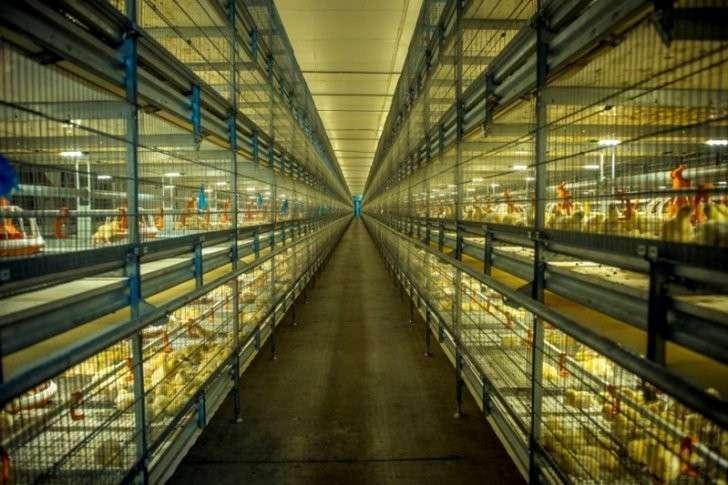 1. Холдинг «Русское зерно Уфа» открывает новую птицефабрику «Ашкадарская» история, политика, факты