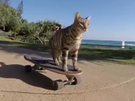 Доброе видео недели: Кот-скейтбордист, медведи на пляже и «НЛО» в Ирландии