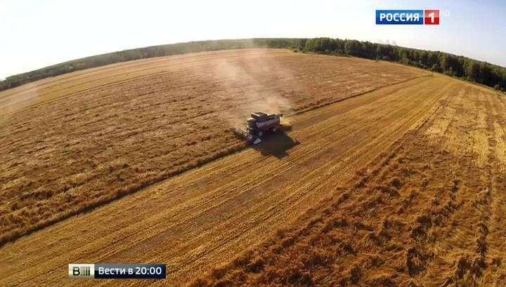 Россию в этом году ждёт рекордный урожай зерна