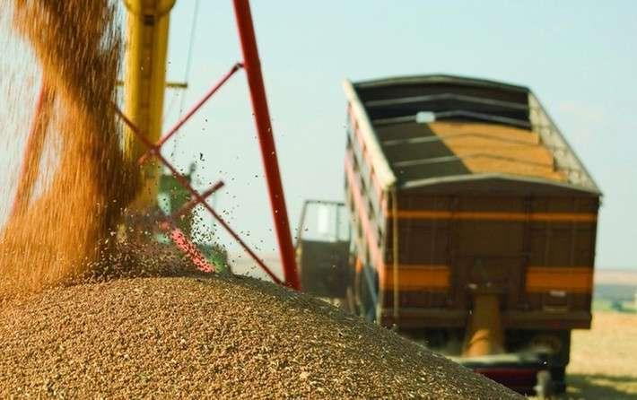 На Кубани впервые собрали урожай на 100% из собственного семенного фонда