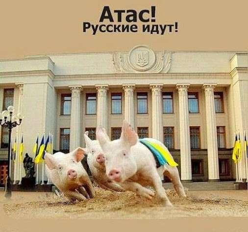 В киевском гадюшнике паника: русские идут!
