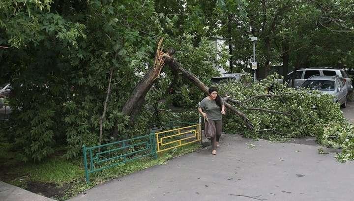 В Свердловской области шквалистый ветер ломает и вырывает деревья с корнями