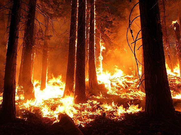 Лесные пожары в Калифорнии уничтожили более 200 домов