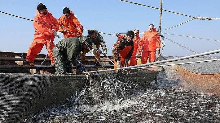 заняться рыболовным промыслом