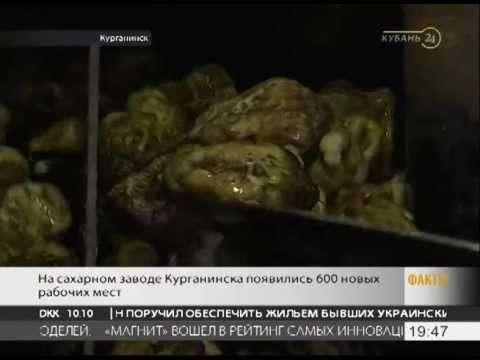 В Краснодарском крае возобновил работу сахарный завод «Курганский»