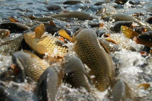9. На Южном Урале началось строительство современного комплекса по разведению рыбы. Сделано у нас, политика, факты