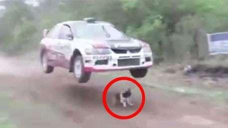 Самая везучая собака в мире - это нужно видеть!