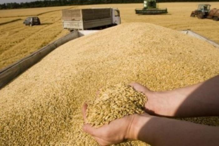 Чудеса правления еврейской Хунты на Украине: рекордные урожаи зерновых приведут к подорожанию хлеба