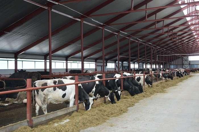 11. В Кировской области открыта молочно-товарная ферма Сделано у нас, политика, факты