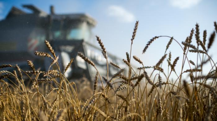 Россия впервые заработала на сельском хозяйстве больше, чем на оружии
