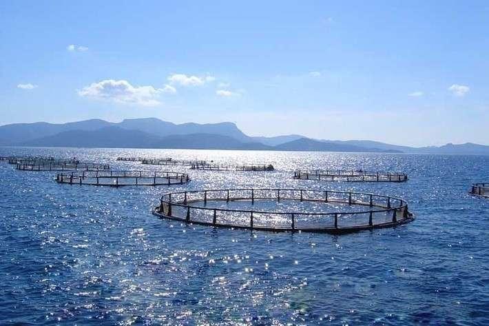 9. Производство аквакультурной продукции в России выросло на 31,5% Сделано у нас, политика, факты