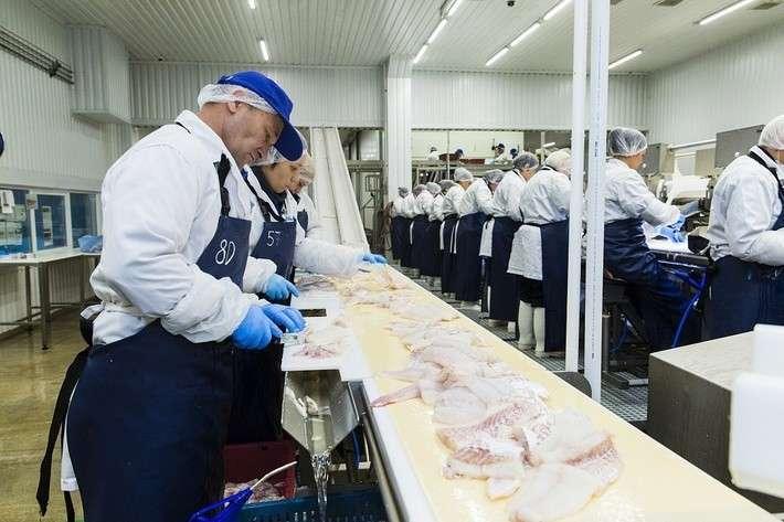 18. В Мурманской области открыта новая рыбоперерабатывающая фабрика Сделано у нас, политика, факты
