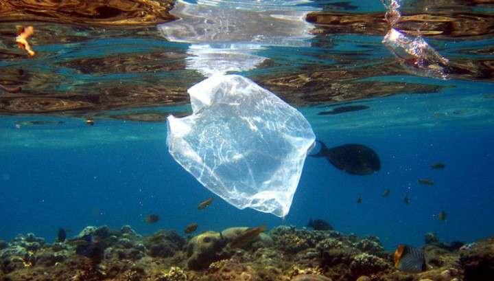 В США считают, что пластика в океанах скоро станет больше, чем рыбы