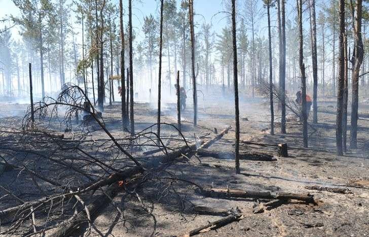 ОНФ: данные по пожарам в Иркутской области занижены в десятки раз