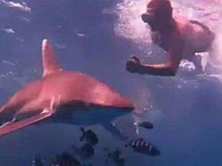 Фотосессия дайверов с акулами в Египте ужаснула пользователей